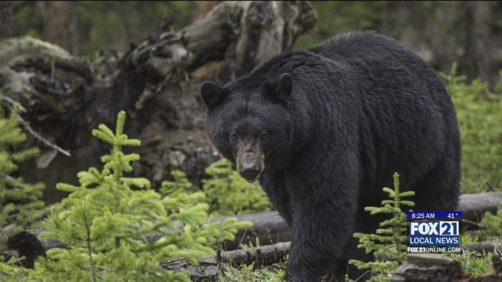 Bear Concerns