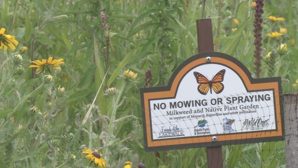 Pollinator Plant Donation