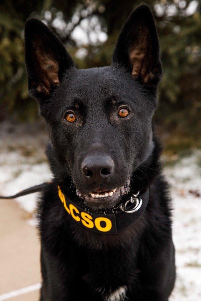K9 Wesson