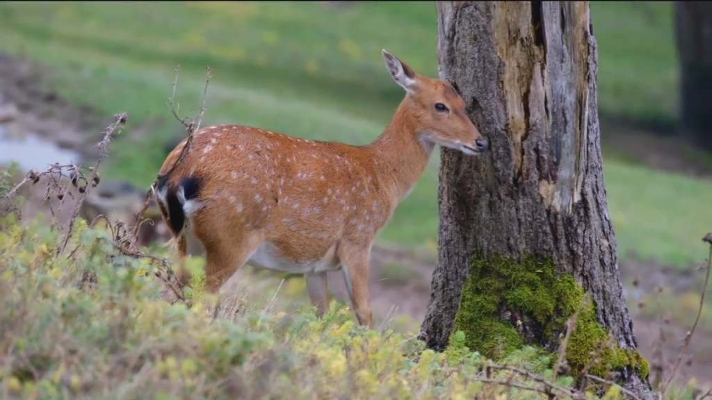 Lawns And Fawns