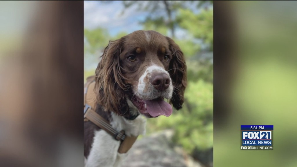 Dog Rescue On Superior Hiking Trail