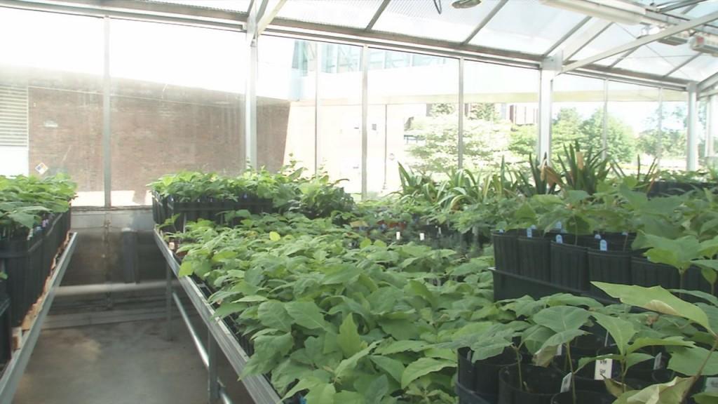 Umd Plantssss