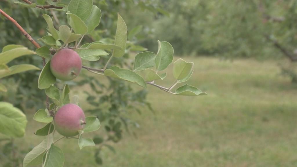 Bayfield Apples