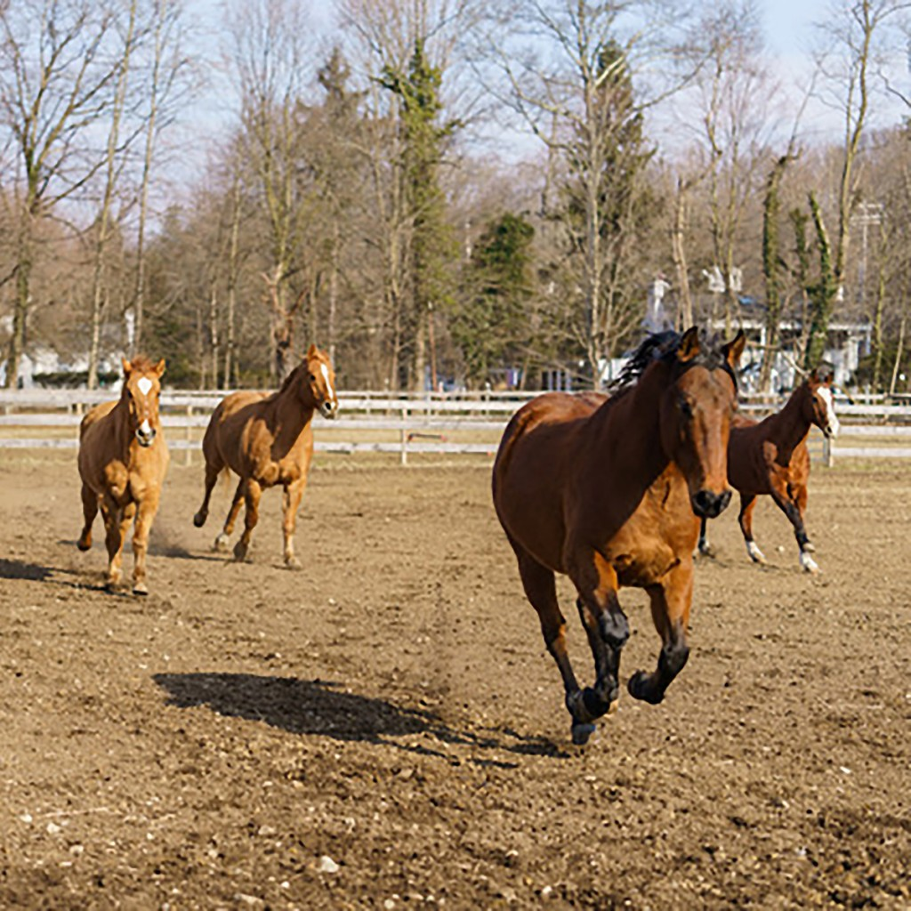 2 Riding Centers