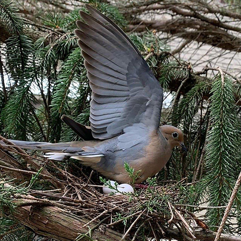 3 Bird Is Word
