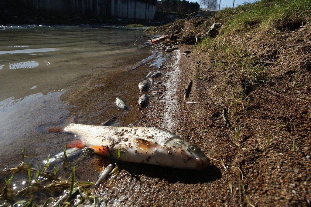 4 Dead Fish