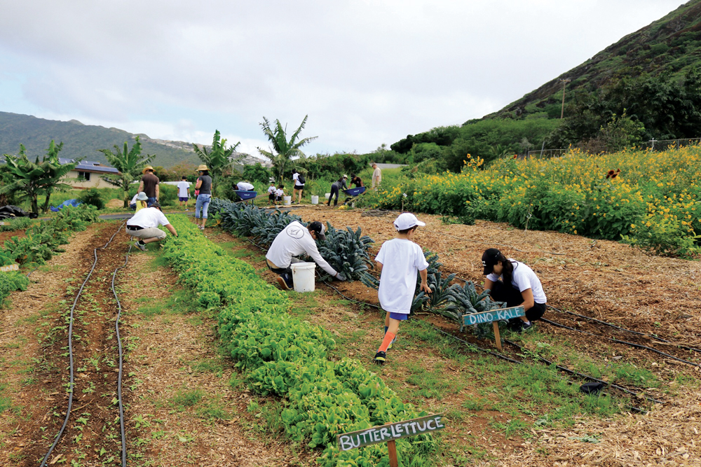 The garden at Keiki and Plow