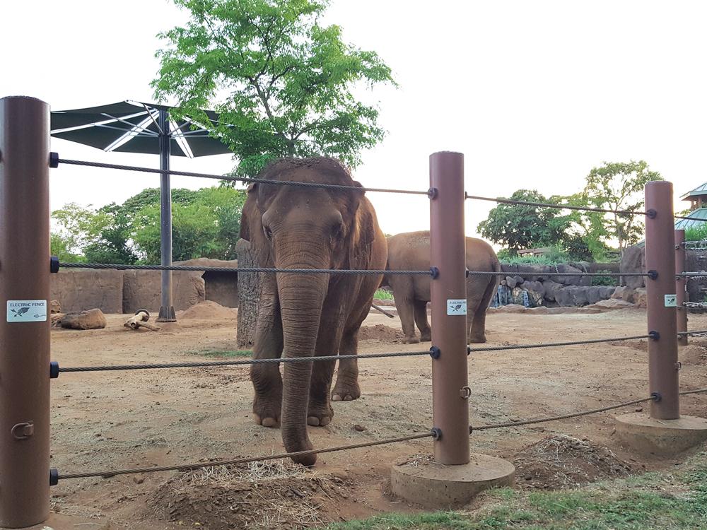 Elephants at Honolulu Zoo