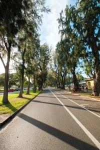 Web Ironwood Trees Kalakaua Avenue Ay Trees 9916
