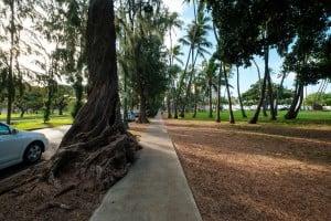 Web Ironwood Trees Kalakaua Avenue Ay Trees 9992