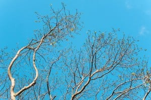 Web Kapok Foster Botanical Garden Ay Trees 2127 2