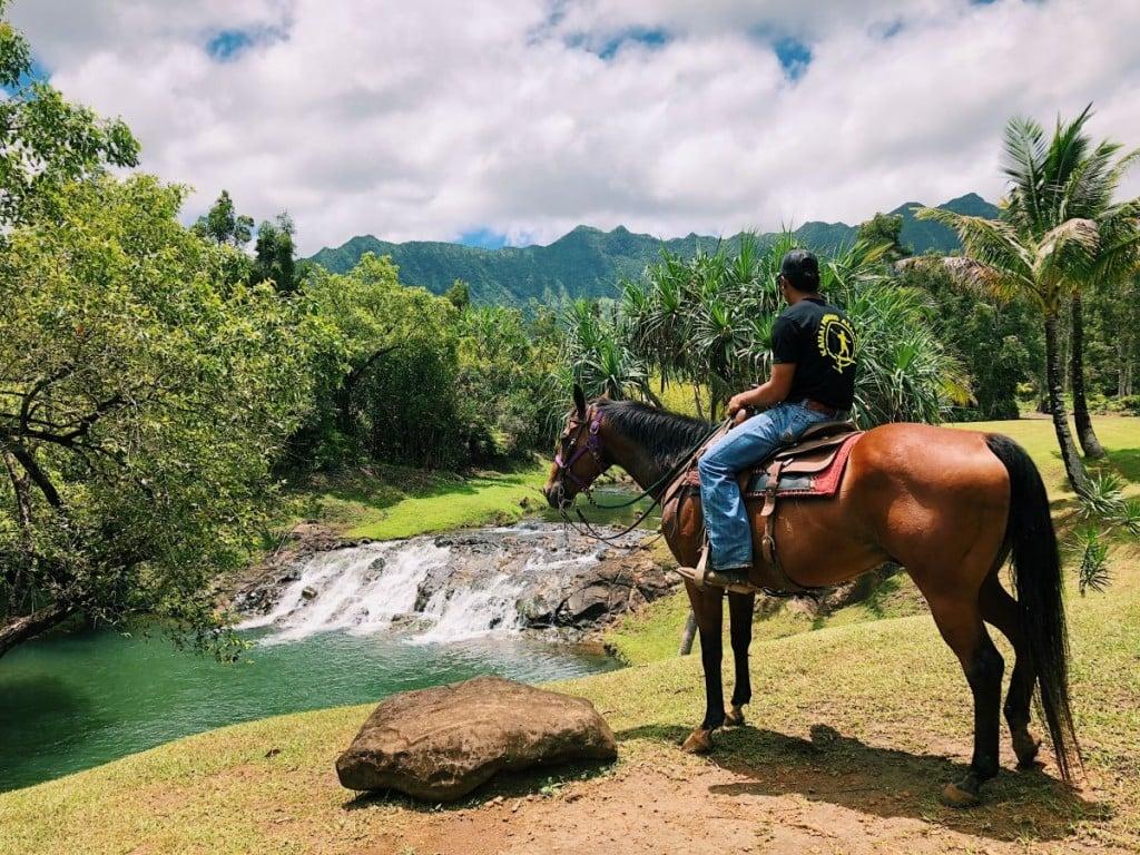Horses Waterfall Rider