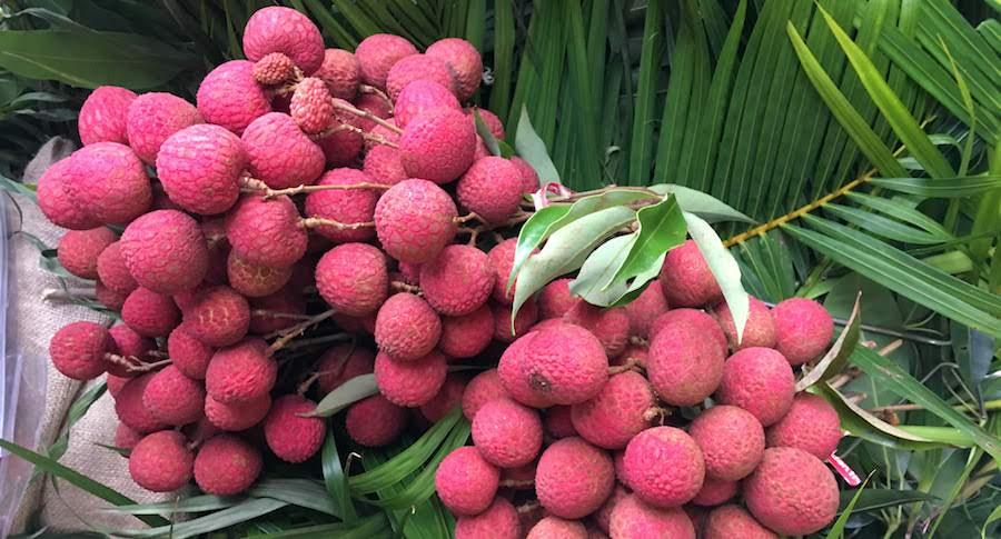 lychee 2