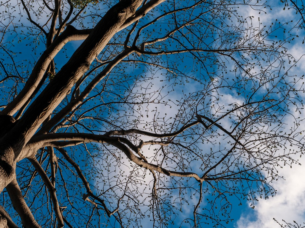 Hn2102 Ay Trees Kapok Foster 2147 Web