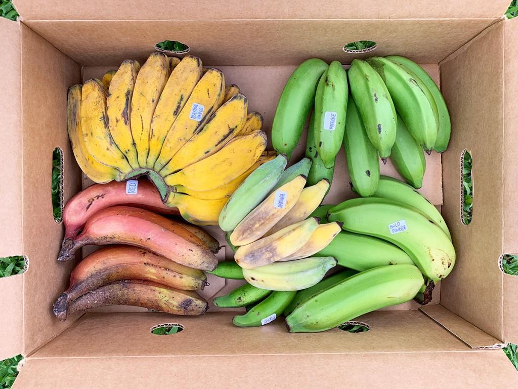 Banana Source Box Two Photo Christi Young