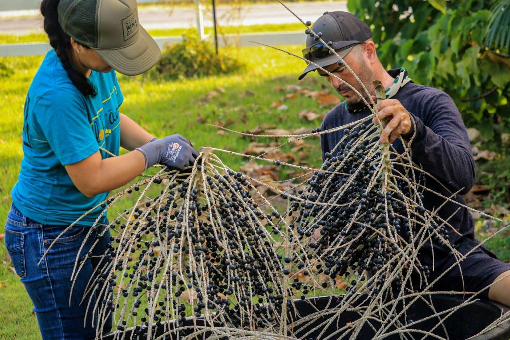 Editors Page Best Of Honolulu 2021 Acai Hawaii Kahuku Farms