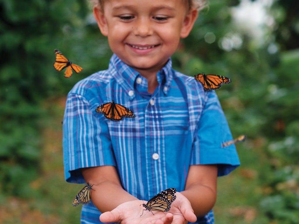 Pacific Monarchs Teaser