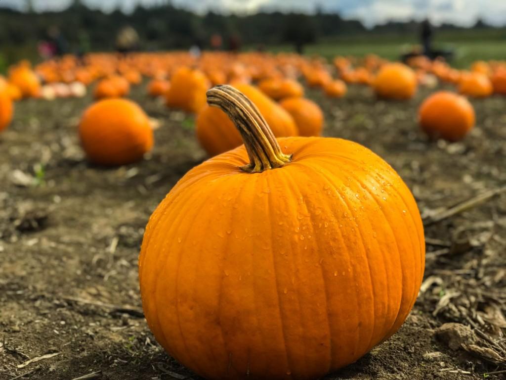 Pumpkin Photo Unsplash Marius Ciocirlan