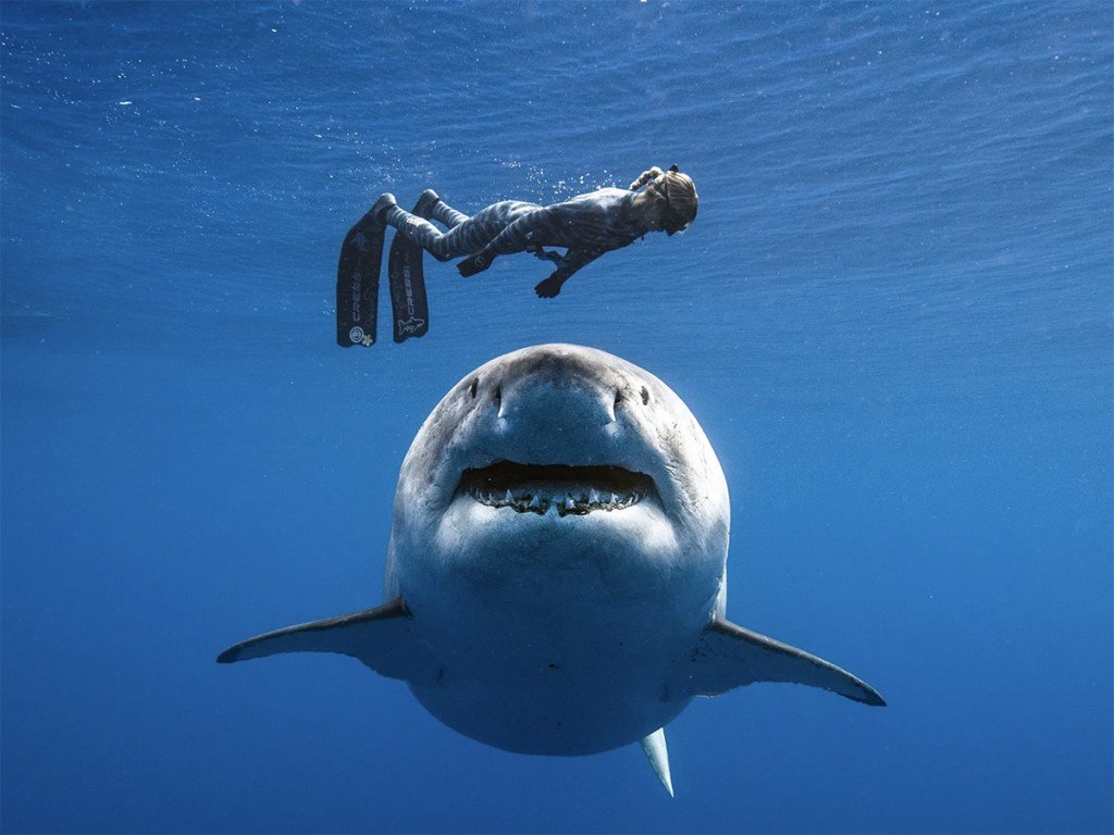 The Shark Chronicles Part I Catching Up With A Shark Attack Victim 5 Years Later Ocean Ramsey Shark Cover