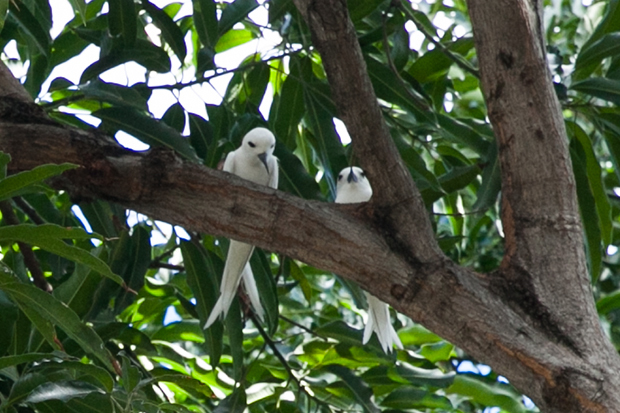 Homa Blog Terns