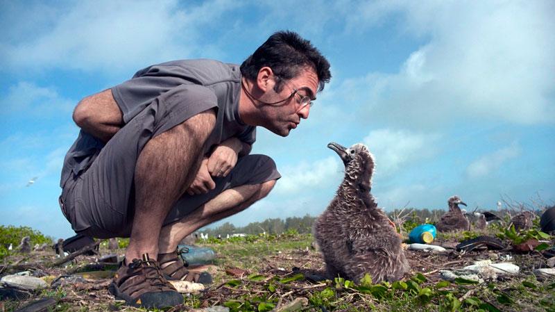 Chris Jordan With Albatross Chick