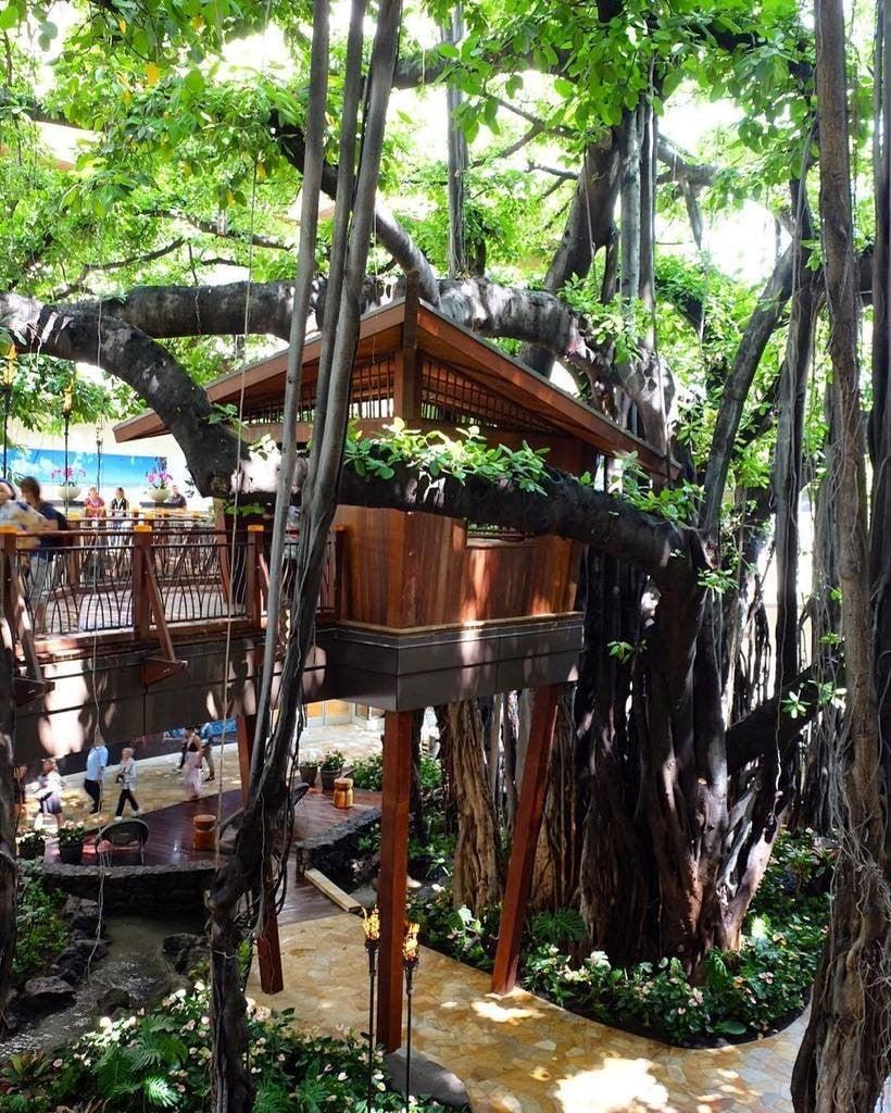 1 Treehouse