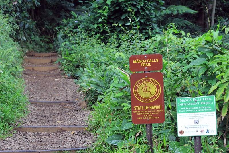 Manoa Falls Trail Staircase