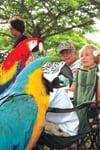 Parrotparty