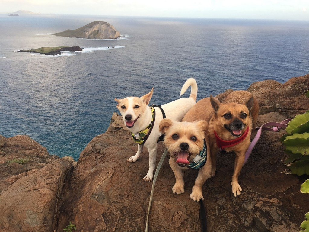 Makapuu Trail Dogs Hiking