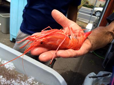 Nimitz Fish Market Splash