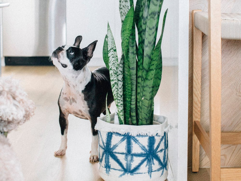 Good And Planty 7 Greenery Inspired Picks From Hawaii Boutiques Plant Sax