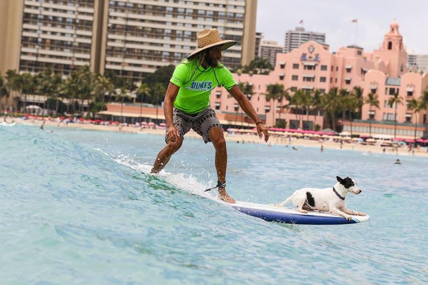 Dukes Oceanfest Surfing Pets