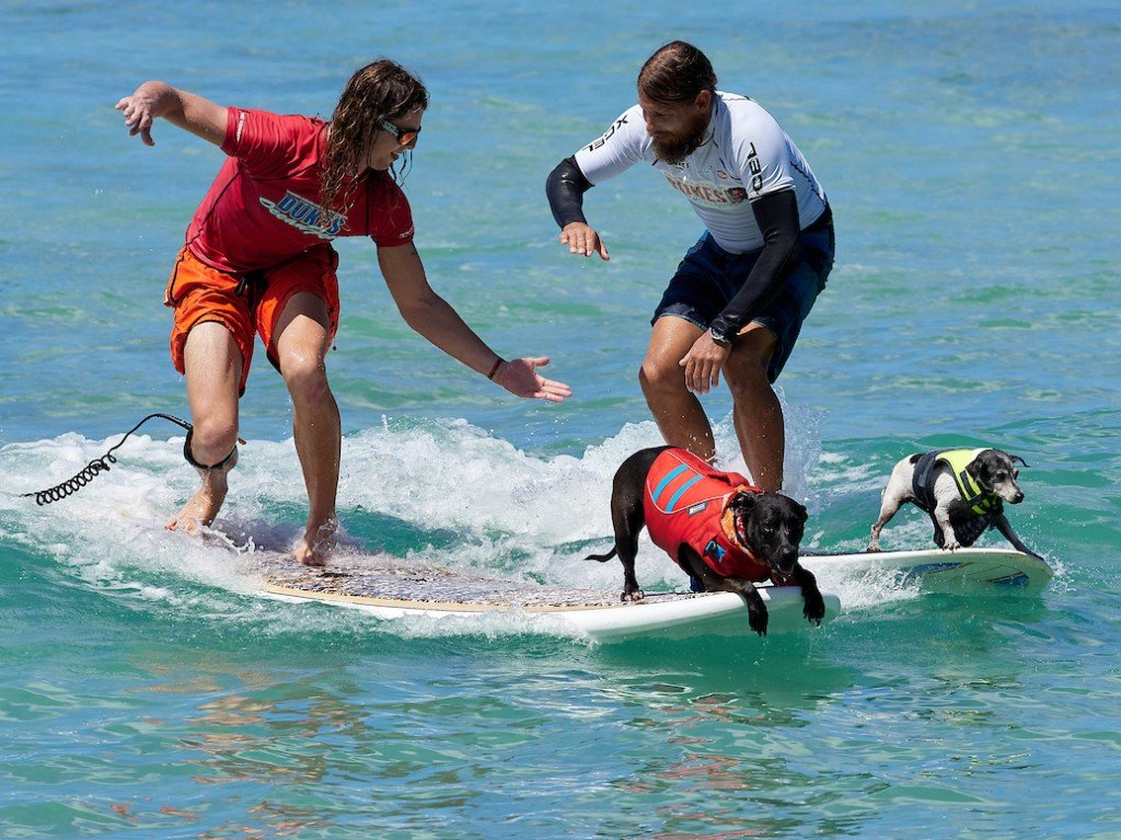Dogs Ducks And Duos Compete In Surf Events At Dukes Oceanfest 2019 In Waikiki Cover
