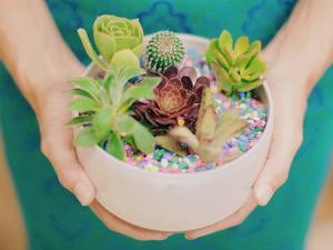 Splash Art Paikosucculentgarden