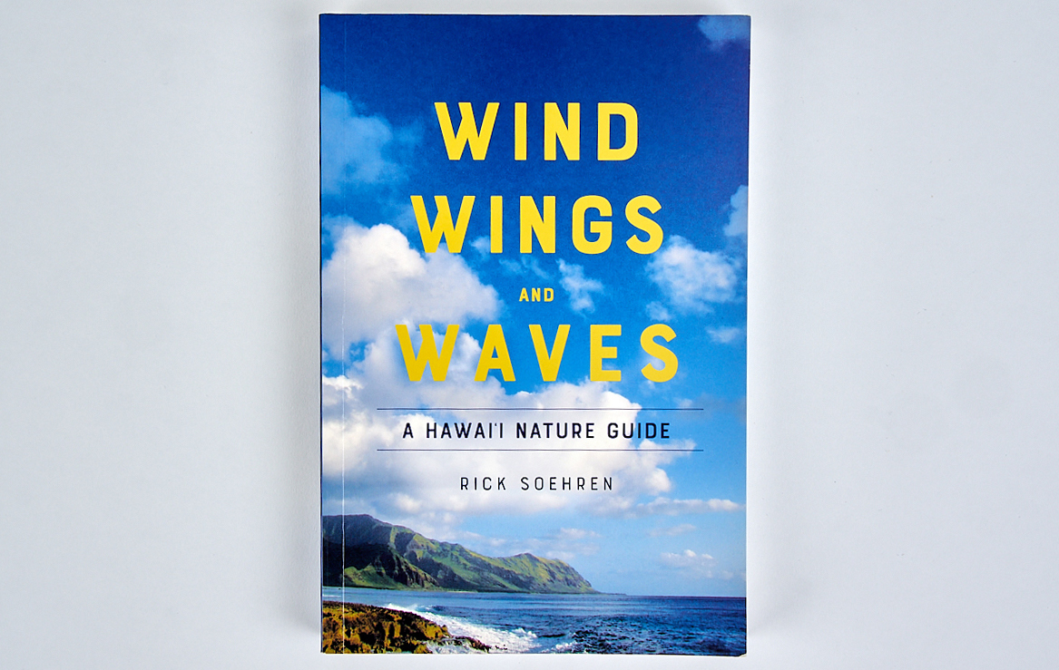 wind waves wing