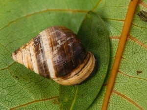 62582 Snailssnail Tale Snail 10