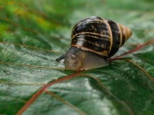62584 Snailssnail Tale Snail 11