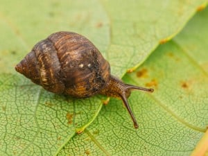 62586 Snailssnail Tale Snail 12