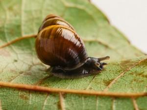 62590 Snailssnail Tale Snail 6