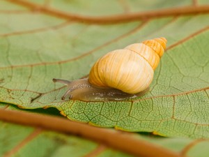62592 Snailssnail Tale Snail 7