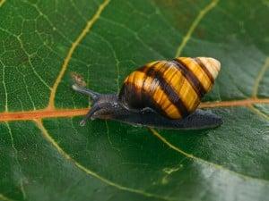 62594 Snailssnail Tale Snail 8