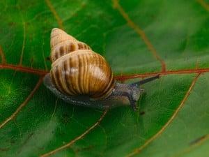 62596 Snailssnail Tale Snail 9