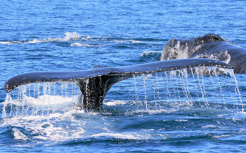 Whale Watching Honolulu