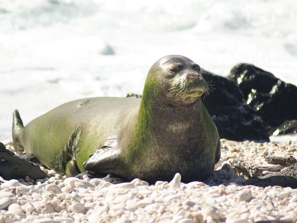 Splash Seal