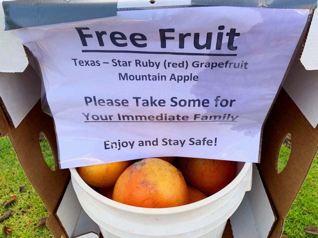 Cyo Fruit Stand Grapefuit