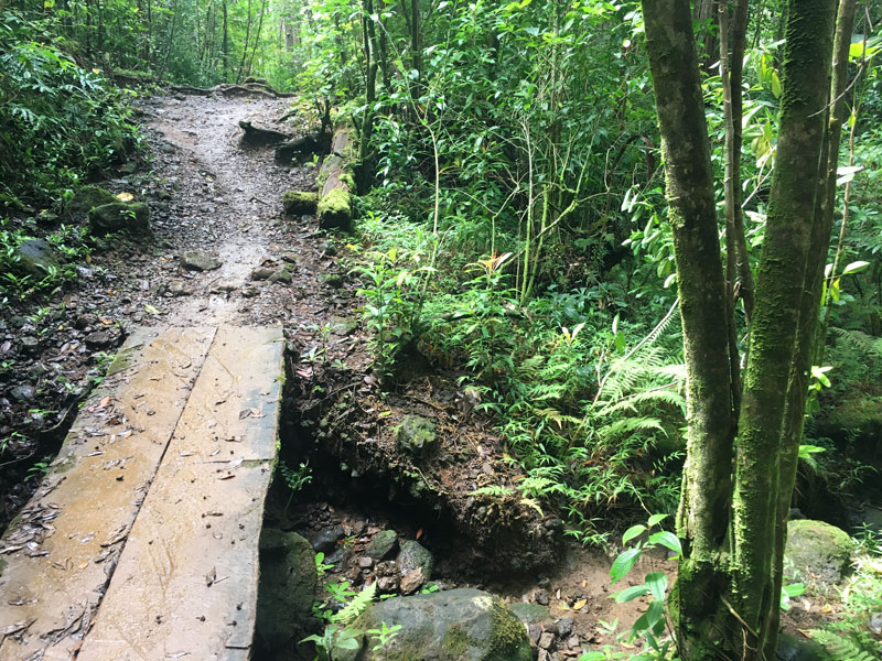 Oahu Hike Puu Pia Muddy