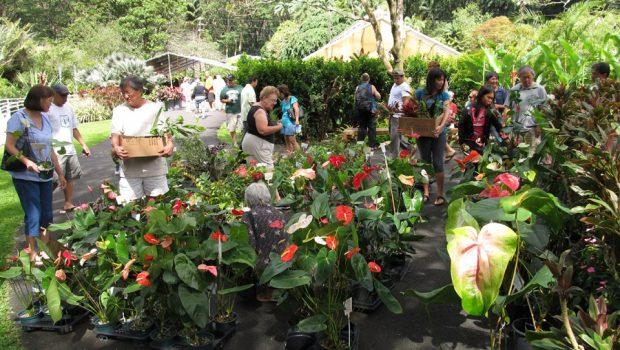 Plant Sale Crowd Anthuriums 0951 620x350