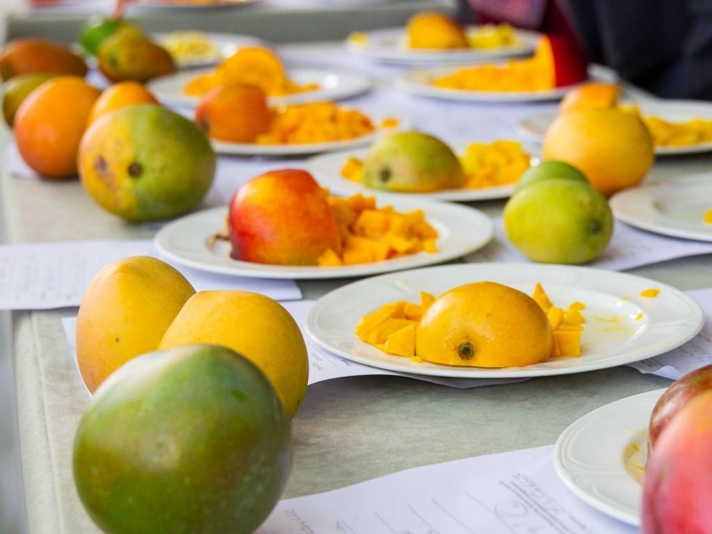 Mangoes 59.1