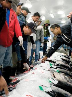 Fishauction2