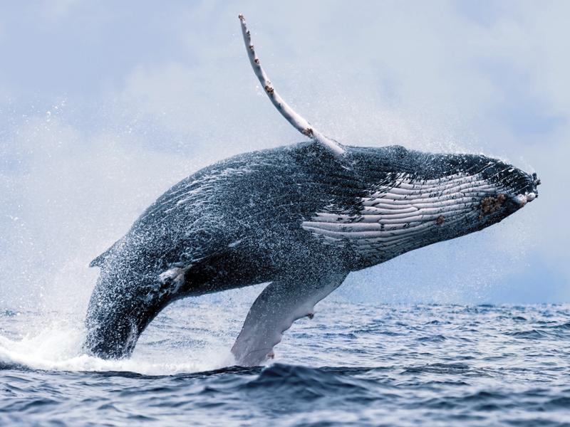 Splash Whale